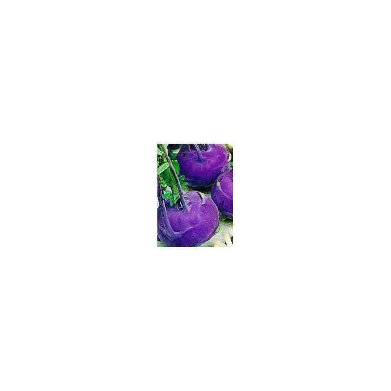 Vroege paarse Weense