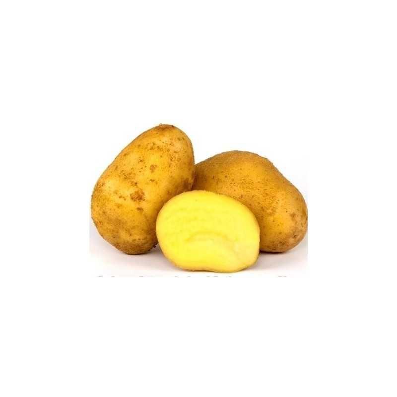 Bölzigs gelbblühende