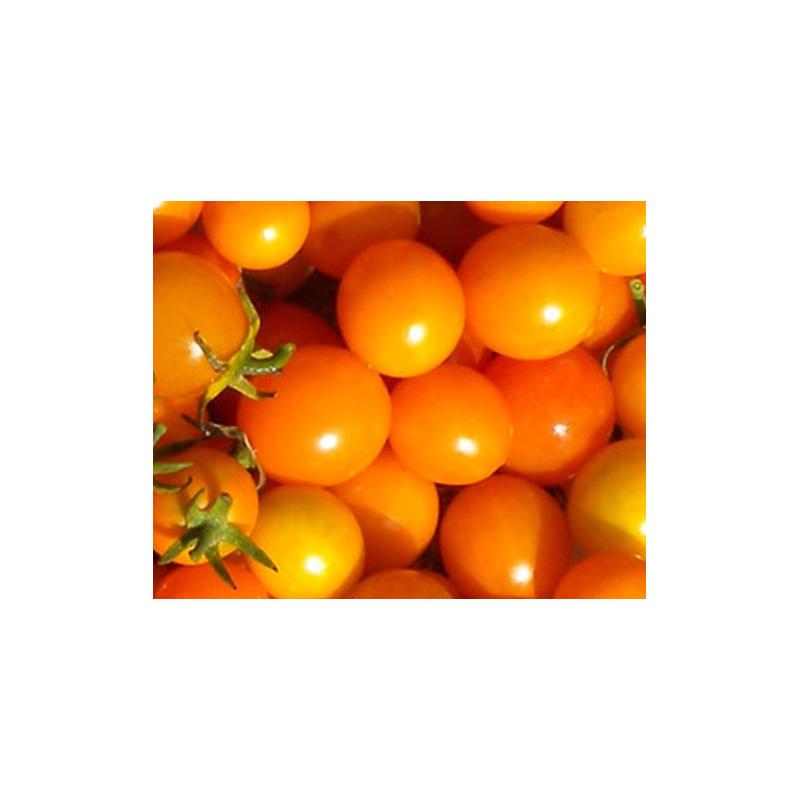 Amy's Apricot