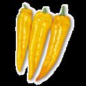 Corno di Toro giallo